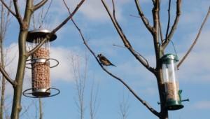bird feeders...