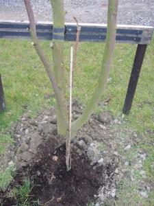 i planted a tree...