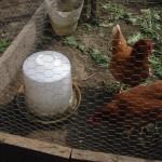 hen water feeder