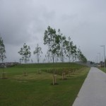 fr-collins-park-tree planting