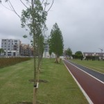 fr-collins-park-jogging cycling track