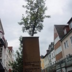 raised street tree planters