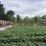 phoenix-park-walled-garden-