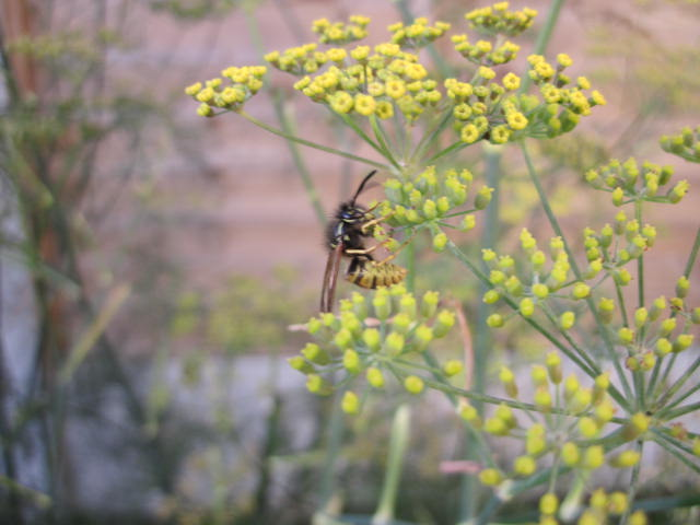 wasp on plant image
