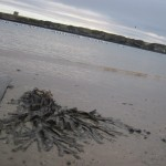 loughshinny beach (12)