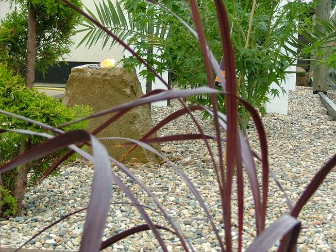 Plants trees and shrubs peter donegan landscaping ltd for Buy plans online