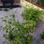 donegan small garden