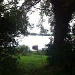 lough ramor camping (9)