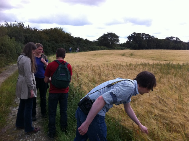 hedgerow walk dublin