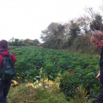 hedgerow walk peter donegan (6)