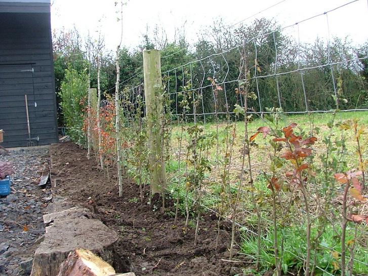 hedge planting dublin