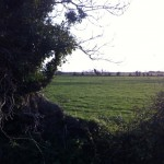 hedgerow walk grace dieu (4)