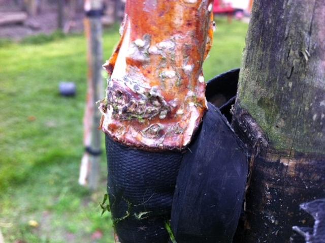 tree straps tree care, dublin