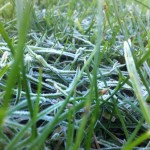 grass december