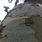 tree bark (1)