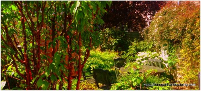 back garden dublin