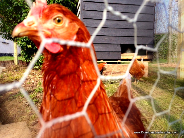 hens, dublin