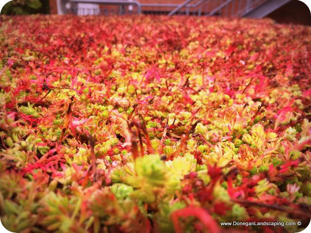 Sedum Green Roof Peter Donegan Landscaping And Garden Design