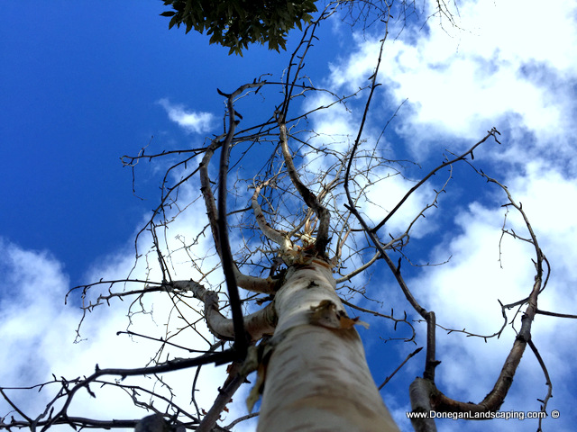 tree planting dublin, donegan (4)