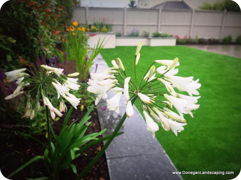 peter donegan, landscaping dublin (3)