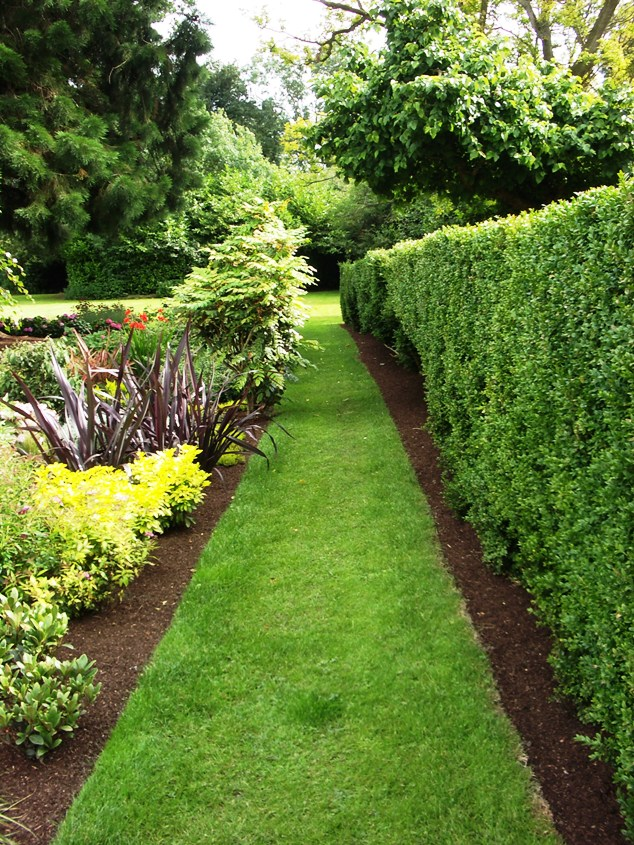 10 Plants For An Irish Hedge Peter Donegan Landscaping