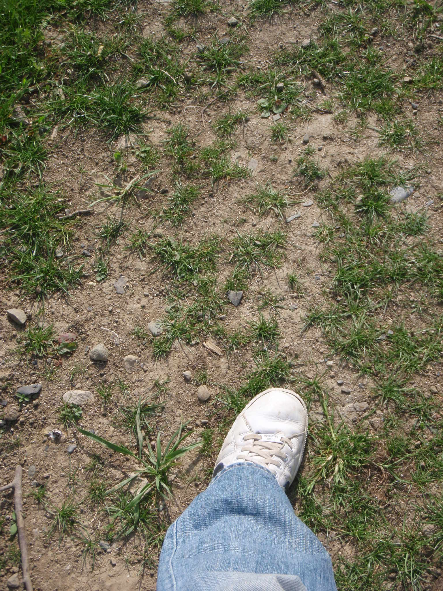 problem lawn solve seed germination