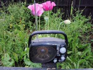 garden talk on the radio - peter donegan
