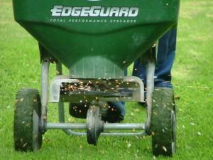 lawn fertilise