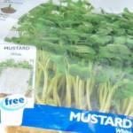 peter donegan garden advice growing mustard seeds
