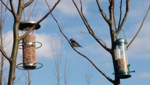 bird feeders...