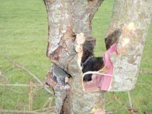 repairing tree