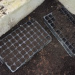 compost in plug trays