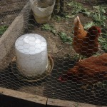 hen water feeder