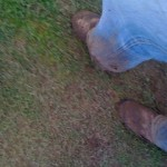 muddy-grass