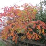 trees dublin