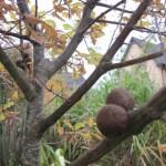 trees ireland