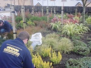 garden hygiene...
