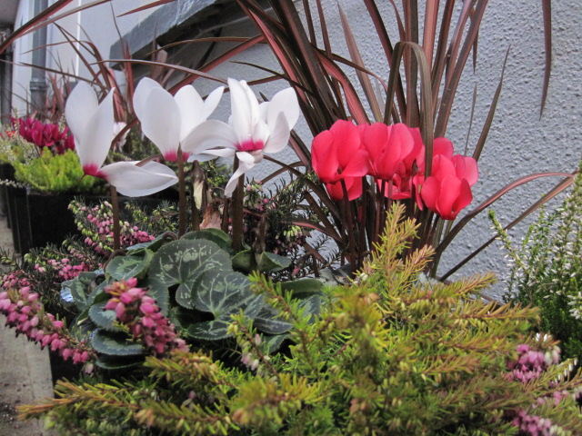 plants planters (9)
