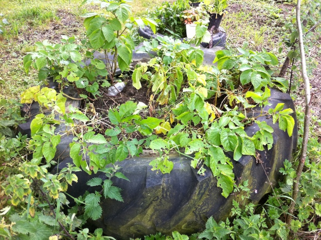plants growing in tractor tyres