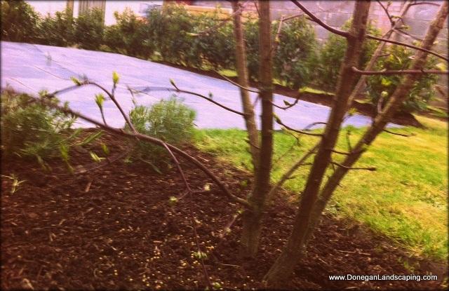 gardens landscaping dublin