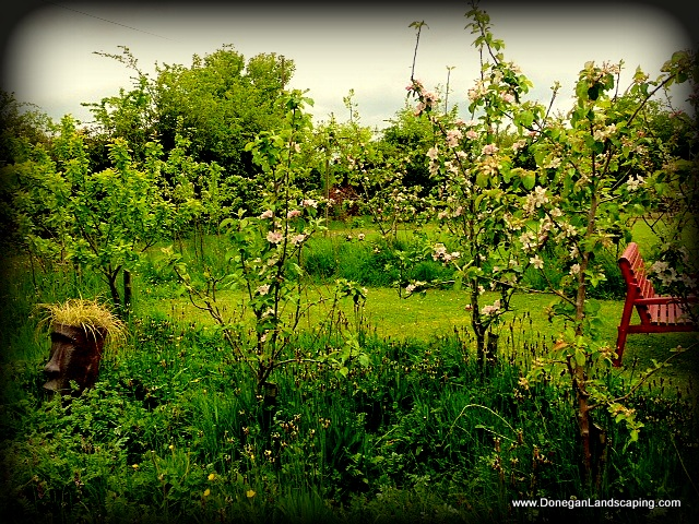 fruit tree hedge
