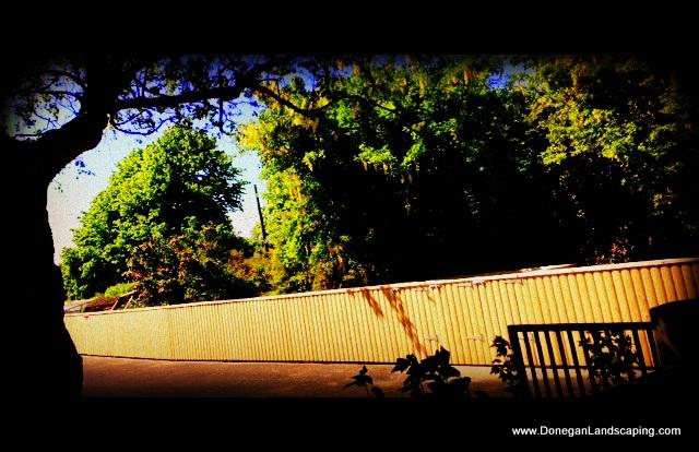 fencing, dublin garden
