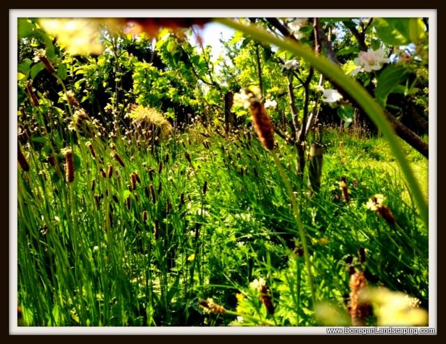wild garden, dublin