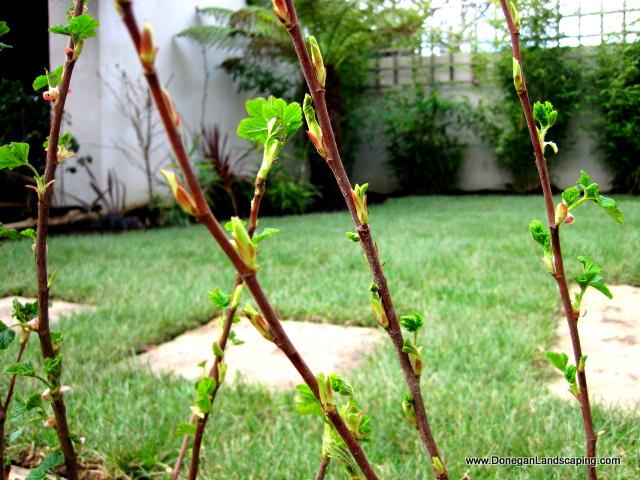 back garden portmarnock (1)