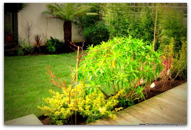 back garden portmarnock (2)-001