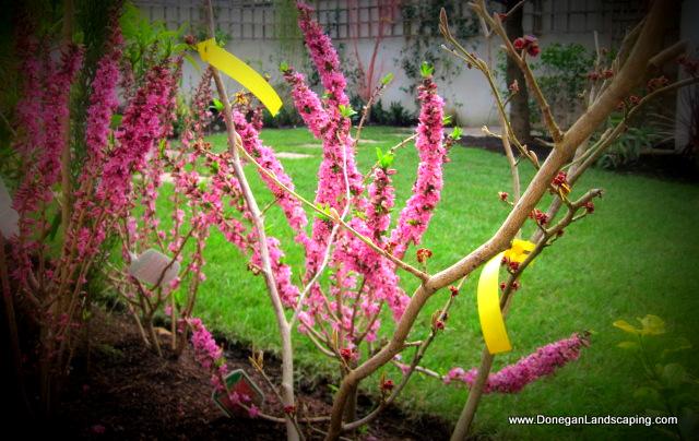 back garden portmarnock (3)