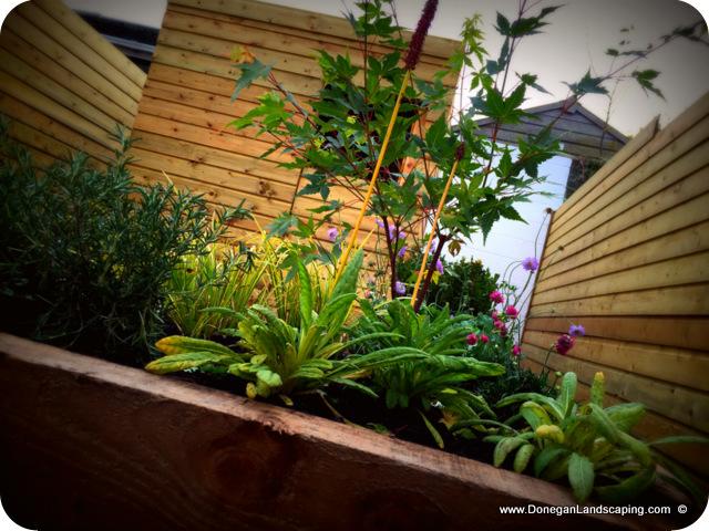donegan landscaping dublin, back garden (7) - Peter ...