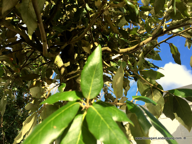 tree planting dublin, donegan (3)